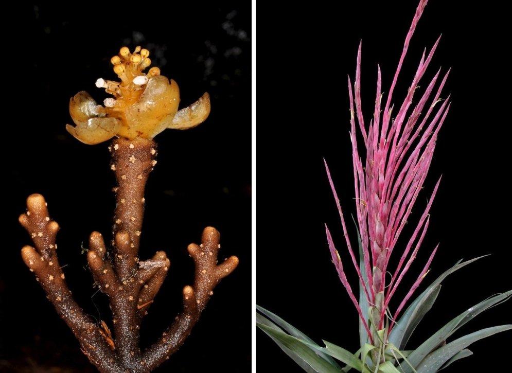 Nesen atklātās sugas, par kurām līdz 2015. gadam nebija zināms