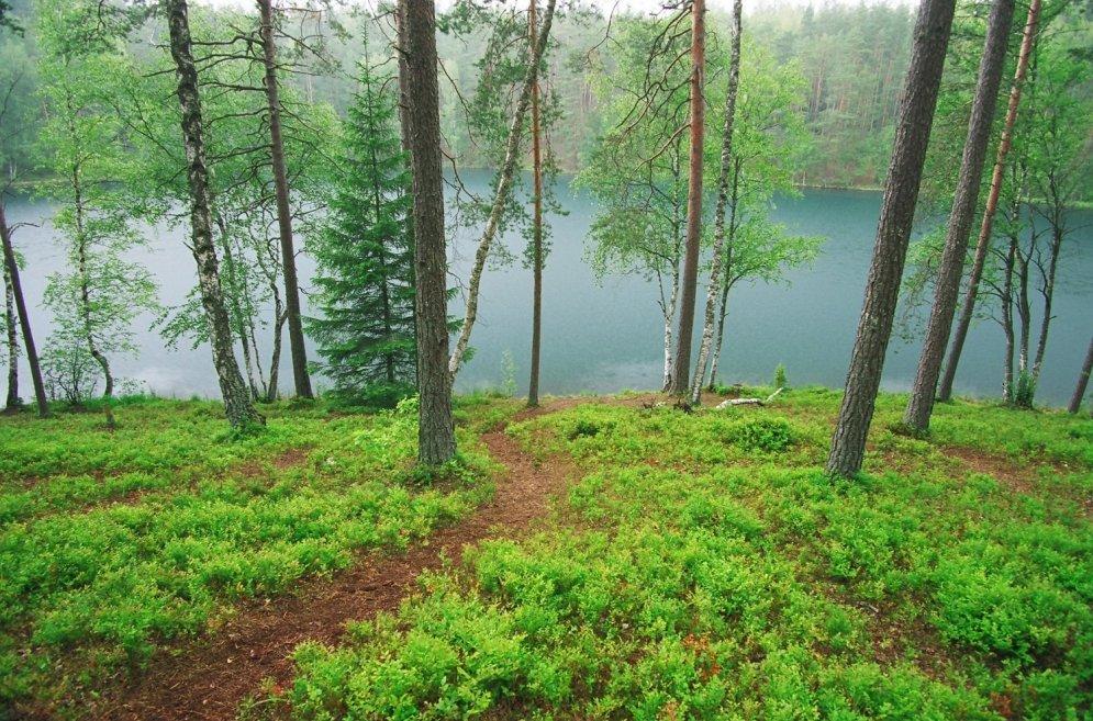 Aicinājums visiem dabas draugiem - stādiet kokus!