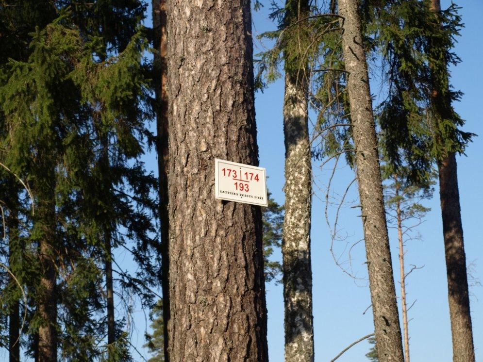 Vērtīgi padomi, kā orientēties mežā pēc pazīmēm dabā