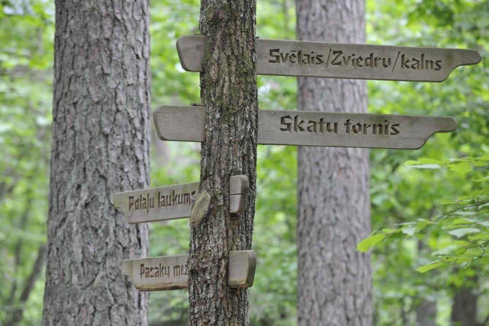 Pastaigas cauri koku galotnēm jeb sešas vietas, kas jāapmeklē Eiropā