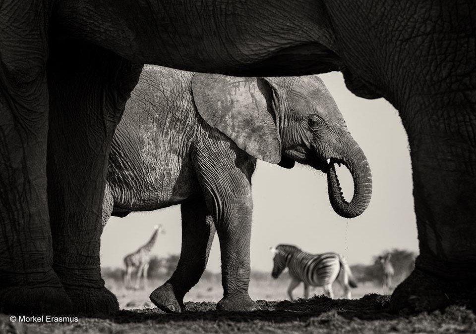 Labākās bildes ar dzīvniekiem, kas uzņemtas 2015. gadā