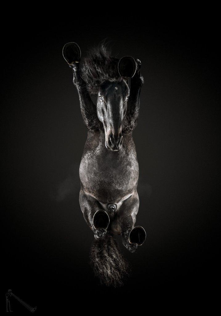 Литовский фотограф первым в мире сделал чудесные фотографии лошадей… снизу