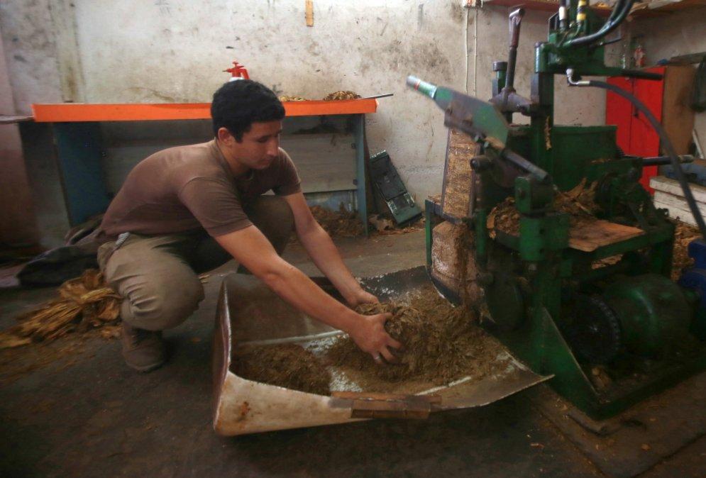 Apdraudētā palestīnas lauku tabakas industrija