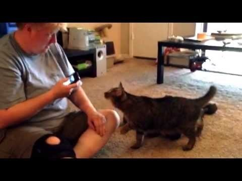 Lūk ko dara kaķa tulkotājs ar kaķi...