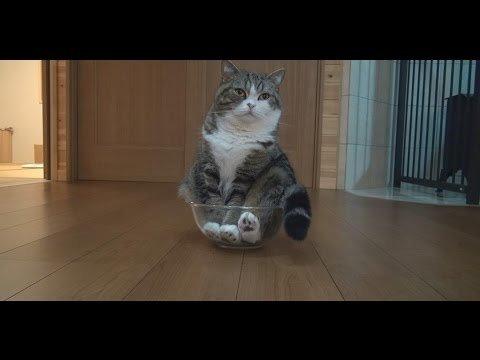 Kaķis, kurš sevi uzskata par šķidrumu