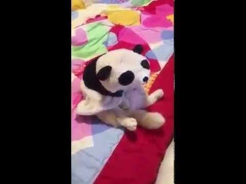 Citāds pandas mazulis