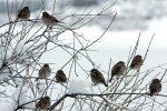 Gaisa temperatūra vietām Kurzemē pazeminājusies līdz -12 grādiem