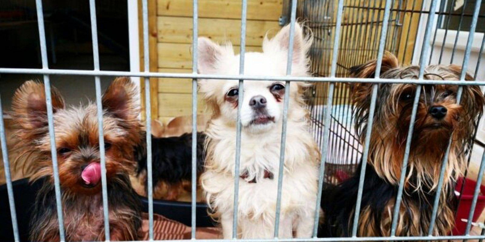 """Дело о """"собачьем концлагере"""": с хозяйки 58 собак хотят взыскать 29 000 евро"""