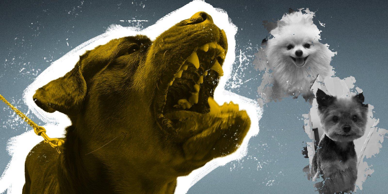 От красных ошейников до эвтаназии: как Латвия пытается решить проблему опасных собак