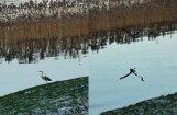 ФОТО ЧИТАТЕЛЕЙ: Птицы не спешат улетать в теплые края