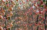 Ābolkūka, ābolu pīrāgs, ābolmaizes - TOP 12 gardumi ar āboliem