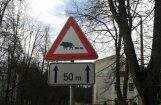 PVD: Āfrikas cūku mēra uzliesmojuma draudi Latvijā ir augsti