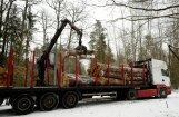 Эксперт: Польша вырубкой Беловежской пущи нарушает законы ЕС
