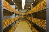 Живущий в Канаде латыш: в Латвии есть шанс найти золото, и страна станет очень богатой