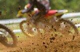 PČ motokrosā MX3 klasē startēs arī 'Motoparks Kandava Sumata MX Team'