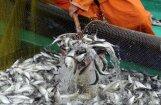 Zivju nozveja deviņos mēnešos pieaugusi par 69,5%