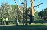 ФОТО: Дерево с латышским орнаментом в парке Победы завернуто в черную пленку (дополнено в 16.55)
