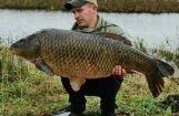 Foto: Īdeņas zivju dīķos noķerta 23 kilogramus smaga karpa