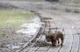 Sestdien daudzviet Latvijā gaidāms lietus; vietām slapjš sniegs