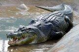 Крокодил убил молодого футболиста во время пробежки