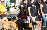 Leons Stiprais: Vai mūs izglābs somu mīlestība pret dzīvniekiem?