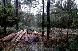 Lasītājs noraizējies par koku izciršanu Biķernieku mežā
