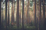 Шведская компания продает обширные лесные угодья в Латвии