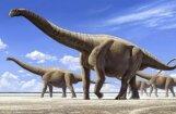 Kāds bijis lielākais dzīvnieks planētas vēsturē?