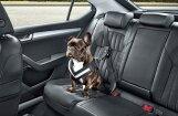 'Škoda' piedāvā drošības jostu suņiem