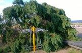 ФОТО: Вырванные с корнем сосны и покореженные машины - Саулкрасты приходят в себя после бури