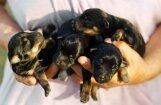 ЧП в Резекне: новорожденных щенков пытались утопить, а затем выкинули в контейнер