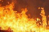 Новый пожар: теперь горит до 30 га болота в Салской волости