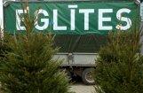 В Зиепниеккалнсе двое мужчин задержаны за кражу новогодних елок
