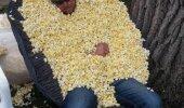 Kas par kukurūzas graudu!