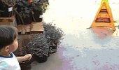 Cik bīstamas var būt mazgātas grīdas...