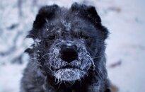 Foto: Kā cilvēki dzīvo pasaulē aukstākajā vietā