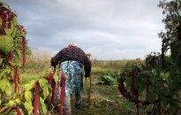 Izrādīs Kairiša dokumentālo filmu par dzīvi Černobiļas slēgtajā zonā 'Neredzamā pilsēta'