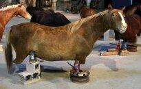 Venēcija grimst mākslā: Andoras bezkāju zirgi, Irākas viesmīlība un ķīniešu desants