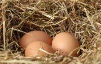 'Balticovo' investēs 300 tūkstošus eiro brīvi turētu putnu novietnē