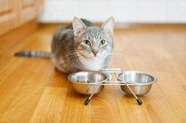 Kāpēc kaķis ēdienu izņem no bļodiņas un apēd citur
