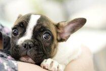 Kāpēc suns baidās no pērkona un salūta
