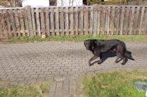 Ko darīt ar lielu suni, kas baidās pat no terases