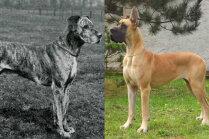 Foto: Kā gadu laikā mainījušies pasaulē populāri suņi un kaķi