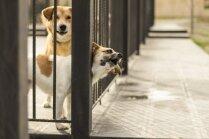 Amizants video: Šunelis viltīgi atver būra durvis un aizmūk
