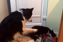 Video: Suņuks žēli noskatās, kā kaķis izēd viņa pusdienas