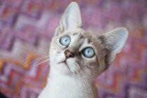 Kāpēc kaķi mēdz ilgstoši skatīties tukšumā