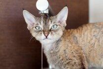 Kāpēc kaķi grib dzert ūdeni no krāna, nevis bļodiņas