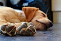 Kāpēc sunim jāgriež nagi? Speciālista padomi, kā to pareizi darīt