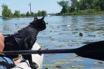 Mazā pantera Siriuss Bleks – piķa melns kaķis, kas nesmādē dubļus
