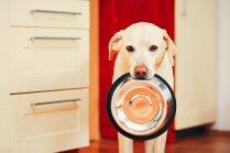 'Dogo' sāga: pētījums atklāj saistību ar barību; ražotāju neielaiž konferencē